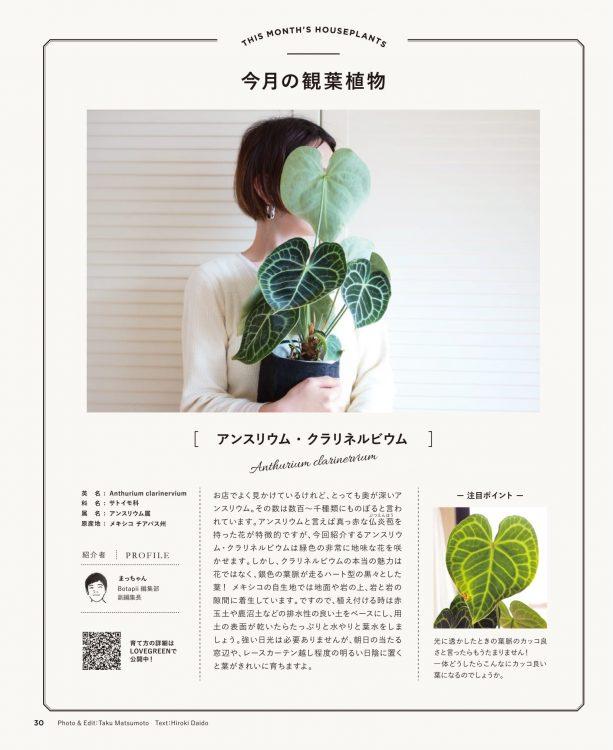 今月の観葉植物