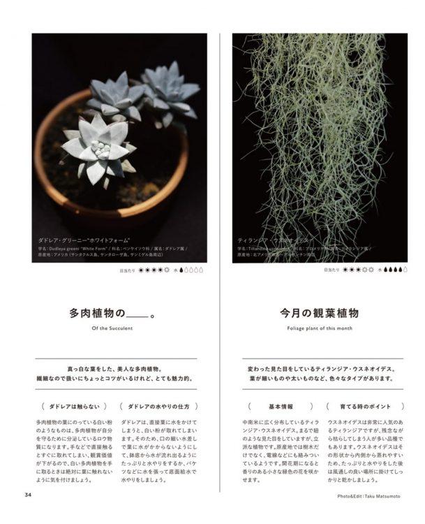今月の観葉植物・多肉植物の__。