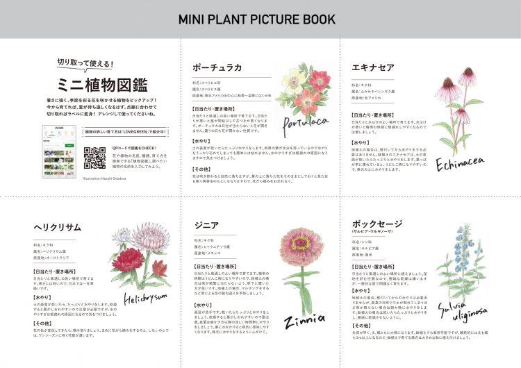 ミニ植物図鑑